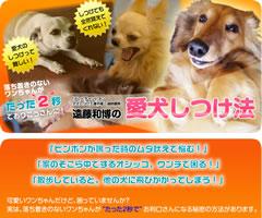遠藤和博の犬のしつけ講座